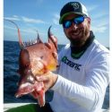 HOGFISH is Photo of the Week thru April 24th
