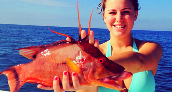 Catch Hogfish with hook and line