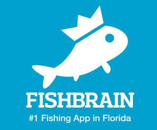 FishBrain Banner – 1