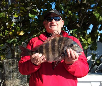 fishing for sheepshead in tampa bay
