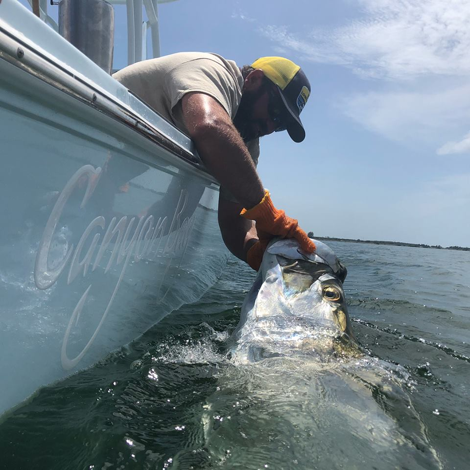 Handle Tarpon With Care When Coming Alongside