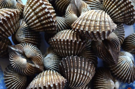 florida scallops