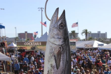 King Mackerel at the scales during the King of the Beach