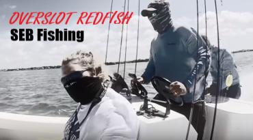 Overslot Redfish in Tampa Bay