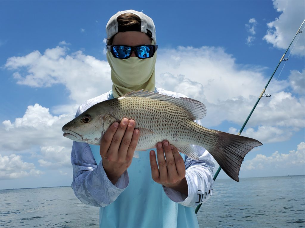 catch mangrove snapper in tampa bay while late summer fishing