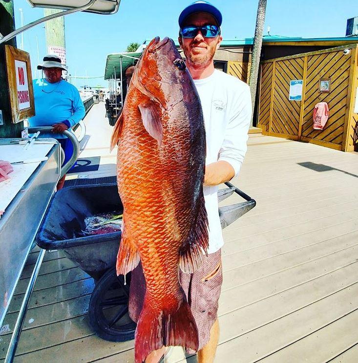 fish for mangrove snapper on floridas atlantic coast