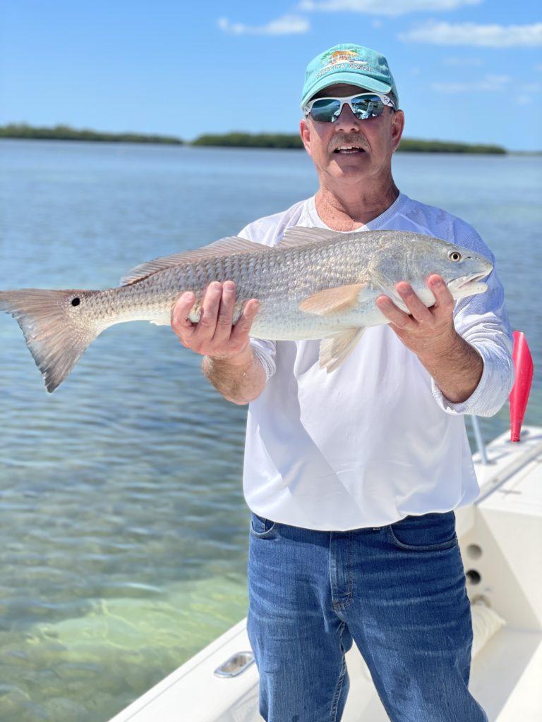redfish caught on tampa bay