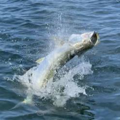 Captain Skylars Mad Beach Fishing Report – May 2021
