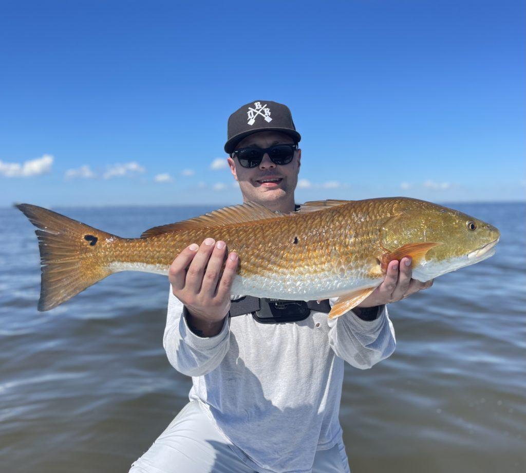 redfish in tampa bay